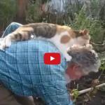 Gatto ama il suo papà umano