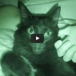 Arriva la notte i gatti prendono possesso della casa e del letto