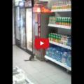 Gatto alle prese con un distributore automatico