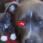 Gatto & Cane: I due gemelli