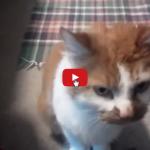 Gatto: Non stavo facendo niente