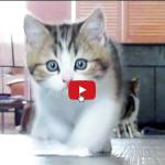 Vivere felici secondo i gatti