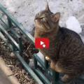 Love story tra gatti