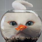 Perchè si dice pesce d'aprile? Ecco la storia e la tradizione nel mondo