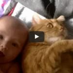 Gatto e bebè diventeranno grandi amici