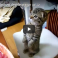 2 minuti di video per desiderare un gatto