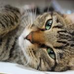 Il gatto percepisce il suono di un nome