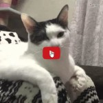 Gatto chiede alla mamma umana di continuare a massaggiare