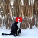 Gatto cerca di capire da dove vengono quei fiocchi di neve