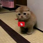 Per un gatto, di tutti i giochi nessuno è fatto meglio del proprio umano