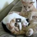 Arriva un nuovo gattino adottato in casa e cerca la sua nuova mamma ma ....