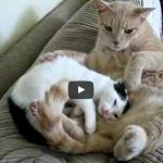 Arriva un nuovo gattino adottato in casa e cerca la sua nuova mamma ma ….