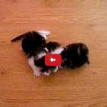 Mamma gatta contrariata perché hanno preso i sui gattini