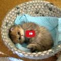 Gattino appena sveglio in un cestino dolcissimo