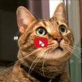 Quando un gatto cambia casa