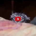 Se hai la sensazione di essere spiato potrebbe essere il tuo gatto