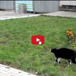 Gatto protegge il suo territorio, scontro epico