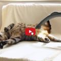 Gatto va matto per l'aspirapolvere