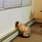 Se non vuoi rovinare i rapporti con il gatto