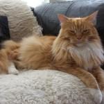 Come si fa a chiedere a un gatto il permesso di toccarlo?