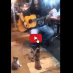 Gattini spettatori d'eccezione