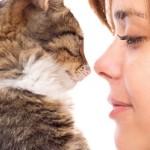 Se il tuo gatto scappa o addirittura ti graffia ogni volta che ti vede è colpa tua, devi imparare a parlare la sua lingua
