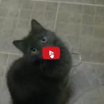 Gatto vuole giocare al suo gioco preferito