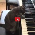 Nora la gatta pianista