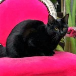 I gatti e la capacità di comunicare telepaticamente
