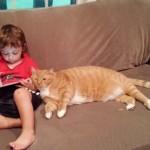 La tenera amicizia tra un bambino e un gatto abbandonato