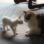 Un nuovo gatto? Scegliere gatti compatibili tra loro