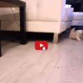 Gatto ruba un ciuccio e guai a portarglielo via