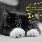 I gatti pensano?