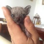 """Nicoletta, la gattina che non cresce: """"Continua la sua lotta per la vita"""""""