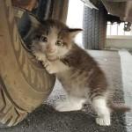 I gatti ci trovano dove non ci saremmo mai aspettati