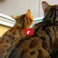 Gatti: Lavoro di squadra