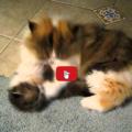 Mamma gatta è fissata con la pulizia
