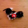 Mamma gatta contrariata i suoi cuccioli non sono giocattoli