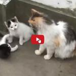 Due adorabili gattini la loro mamma e tanta tenerezza