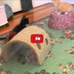 Piccoli gattini birbanti