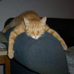 Cosa provoca la depressione nei gatti
