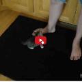 Gattino: Dov'è la mia pappa dov'è ?