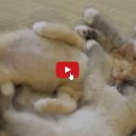L'inno al gatto, custode della casa e dell'animo umano