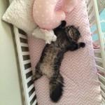 Gatto crede che il lettino sia per lui