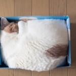 Perché i gatti dormono arrotolati e amano i piccoli spazi?
