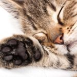 Musica per gatti – Relaxing Music per gatti e gattini