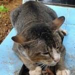 La fedeltà dei gatti: Una raccolta di storie di gatti che amano e hanno amato i loro umani