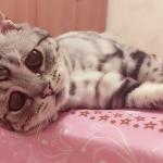 Luhu , la gatta con lo sguardo triste.