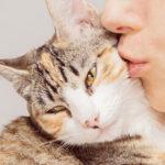 Lista dei desideri di tutti gli appassionati di gatti