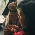 Ad un certo punto ci ritroviamo a condividere la nostra vita con un gatto